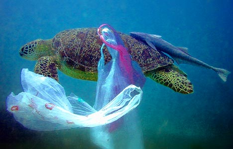 """There Is No """"Away"""" Turtle-plastic-bag-under-water-deep-sea-blue-ocean-garbage-trash-ecology-swim-fish-pollution-caught-shell-legs-toes-feet-head-photo"""