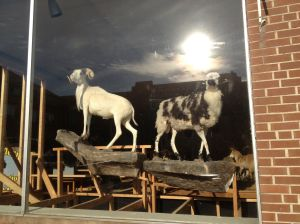 Stuffed Goats in Winder